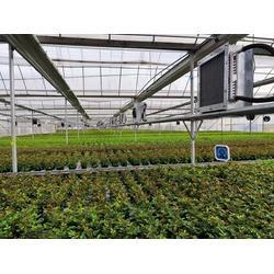 丽江玫瑰花专用棚-丽江玫瑰花专用棚报价-光明温室大棚图片