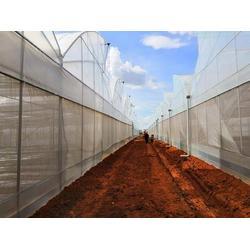 宣威智能温室大棚-光明温室大棚-宣威智能温室大棚建造图片
