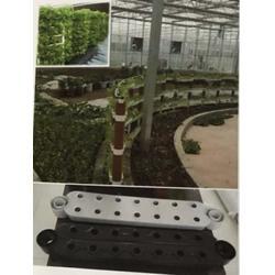无土栽培设施-无土栽培-泰宇机械图片