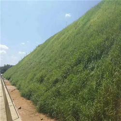 植草毯河道护坡绿化-安徽植草毯(在线咨询)植草毯图片