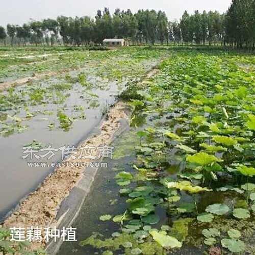 HDPE防渗膜、重庆HDPE防渗膜、晟瑞机毡厂图片