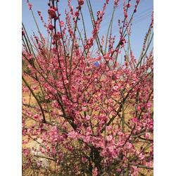 屋顶花园、南京巴山洛水景观公司、杭州花海图片