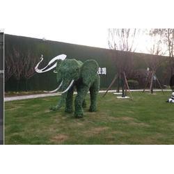 草坪、草坪、南京艺无止境有限公司图片