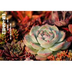 花卉,濮阳世锦花卉基地厂址,鹤壁花卉图片