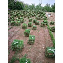 武汉草坪-低价草坪-绿苑园林工程(推荐商家)图片