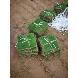 仙桃草坪,草坪厂家,绿苑园林工程(推荐商家)图片