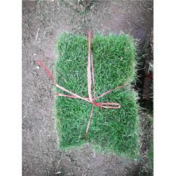 草坪出售-百慕大草皮服務-十堰草坪圖片