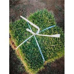 人造草坪-宜昌草坪-百慕大草皮服务图片