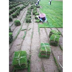 草坪厂家|绿苑园林工程(在线咨询)|黄冈草坪价格
