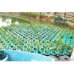 济南水生植物浮岛-大城县聚格塑料制品厂