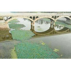 水生植物浮岛_大城县聚格塑料制品厂(在线咨询)图片