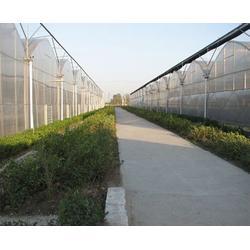 安徽连栋大棚,连栋大棚多少钱,合肥小农人(优质商家)图片