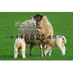 改善母羊体质环境的饲料预混料图片
