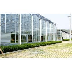 玻璃连栋温室设计方案|齐鑫温室园艺小唐|洛南玻璃连栋温室图片