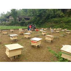 蜜蜂出售电话_贵州蜂盛_纳雍蜜蜂出售图片