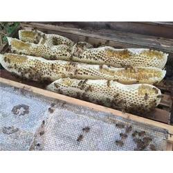 蜜蜂养殖_贵州蜂盛_四川蜜蜂养殖图片