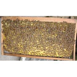 中蜂出售-铜仁中蜂出售-贵州蜂盛(优质商家)图片