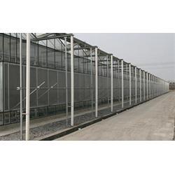 蔬菜温室大棚,齐鑫温室园艺,蔬菜温室大棚