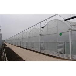 连栋温室、齐鑫温室园艺(在线咨询)、文洛型连栋温室图片