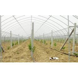 齐鑫温室园艺|大棚钢管|大棚钢管图片