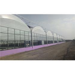 齐鑫温室园艺、连栋温室、双屋面连栋温室图片