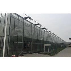 齐鑫温室园艺小唐(图)|中空钢化玻璃大棚温室|玻璃大棚图片