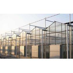 齐鑫温室园艺小唐(图)|中空玻璃温室大棚|中空玻璃图片