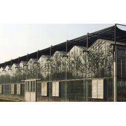齐鑫温室园艺小唐(图)|玻璃大棚建造报价表|玻璃大棚建造图片