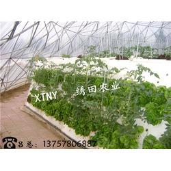 無土氣霧栽培|天津氣霧栽培|繡田農業生態休閑