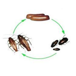 唐山灭蟑螂-灭蟑螂-清波环保技术开发(查看)图片