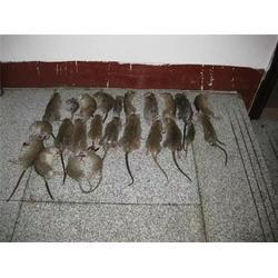 清波环保技术开发、灭老鼠公司电话图片