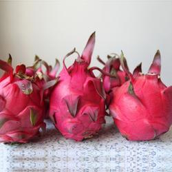 自花授粉火龙果苗园量大从优图片