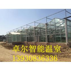 现代化日光温室大棚,卓尔温室设计安装,石家庄日光温室大棚图片