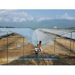 普洱园艺温室大棚维修-宏阳温室大棚-普洱园艺温室大棚图片