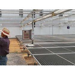 电动移动苗床报价-移动苗床-宏阳温室移动苗床报价图片