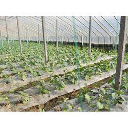宏阳温室大棚 怒江蔬菜大棚施工-怒江蔬菜大棚图片