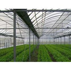 普洱蔬菜大棚维修-宏阳温室大棚-普洱蔬菜大棚图片