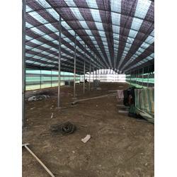 大理食用菌棚维修-大理食用菌棚-宏阳温室大棚(查看)图片