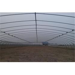 日光温室建设、湖北日光温室、通达农业(查看)图片