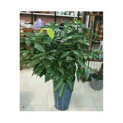 合肥绿植租摆、绿植租摆服务、安徽良园之友(优质商家)
