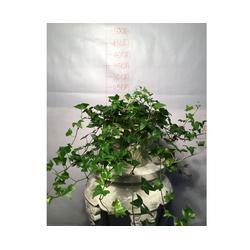 绿植花卉租赁_安徽良园之友(在线咨询)_庐江花卉租赁图片