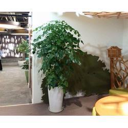 绿植租摆价位|肥东绿植租摆|安徽良园之友图片