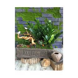 安徽良园之友(图)、室内花卉公司、合肥花卉公司图片