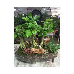 绿植租摆价位,安徽良园之友,绿植租摆图片