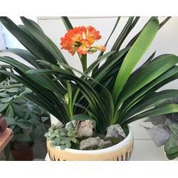 酒店大堂花卉租赁-合肥花卉租赁-安徽良园之友(查看)图片