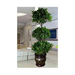 室内绿植租摆|安徽良园之友|合肥绿植租摆图片