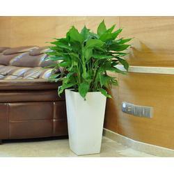 花卉租赁、安徽良园之友、肥西花卉租赁图片
