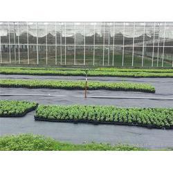 福建防草布|德旭达土工材料|防草布生产厂家图片
