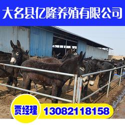 小驴崽,亿隆养殖有知识又专业,小驴崽厂家图片