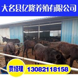 养驴厂|亿隆养殖(在线咨询)|石家庄养驴图片